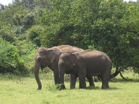 elephants inde