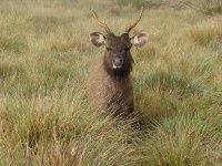 faune du parc national de horton plains