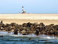 otaries de walvis bay