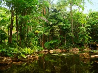 rainforest en australie