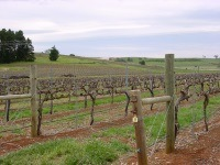 Vignobles de Clare Valley