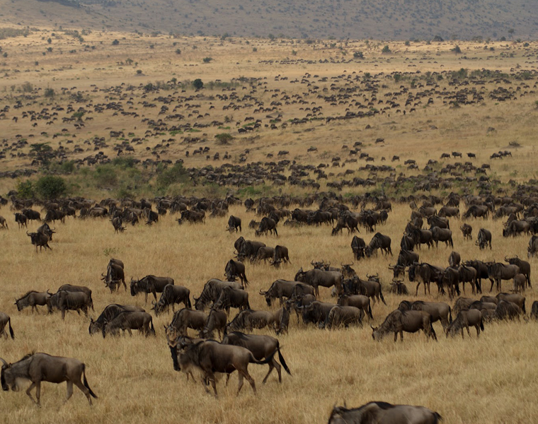 Parc National de Serengeti